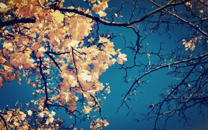 crown yellow branches leaves tree wallpaper
