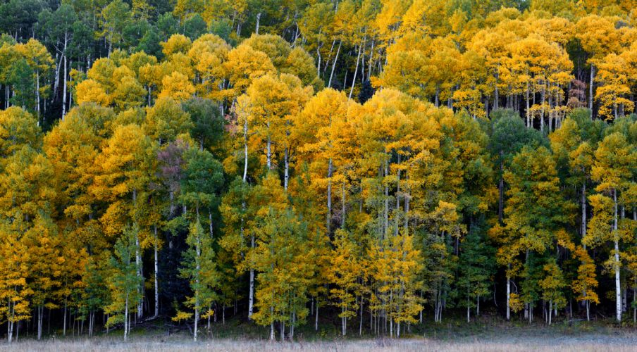 Colorado forest trees autumn wallpaper