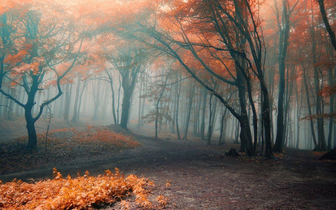 forest orange fog autumn leaves wallpaper
