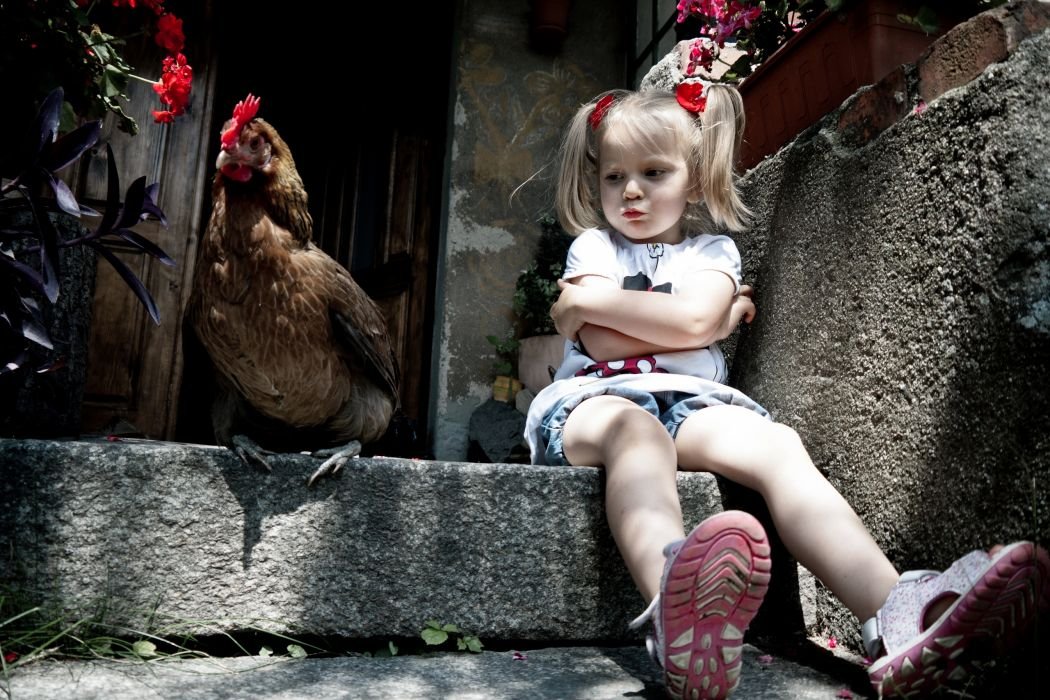 girl chicken situation wallpaper