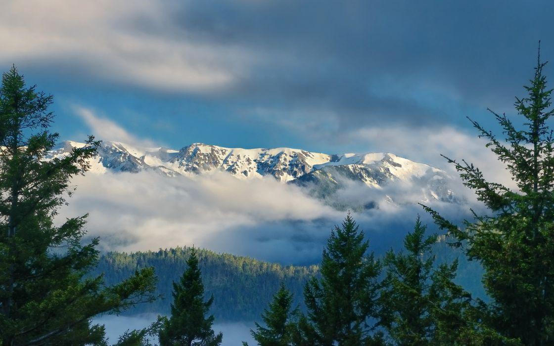 hurricane Ridge  Olympic Mountains wallpaper