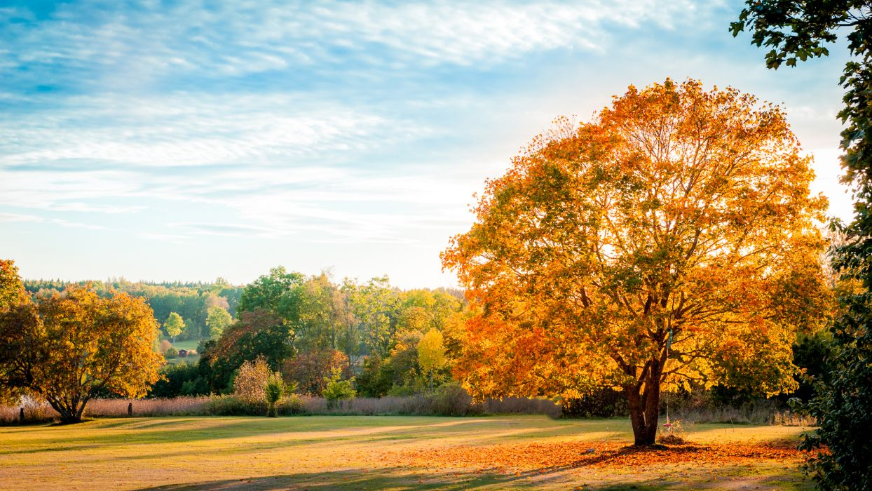 landscape nature autumn trees leaves yellow shadow sky blue wallpaper