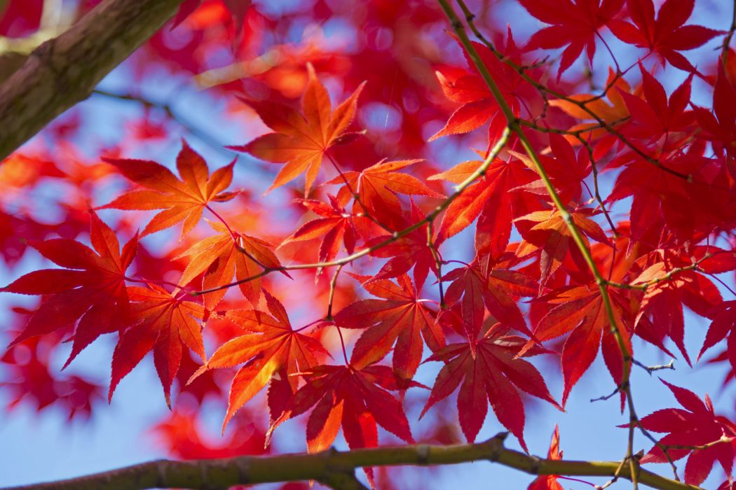 leaves macro branch autumn wallpaper