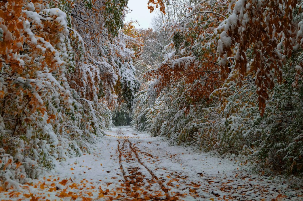 Trees leaves fall october the first snow the road wallpaper