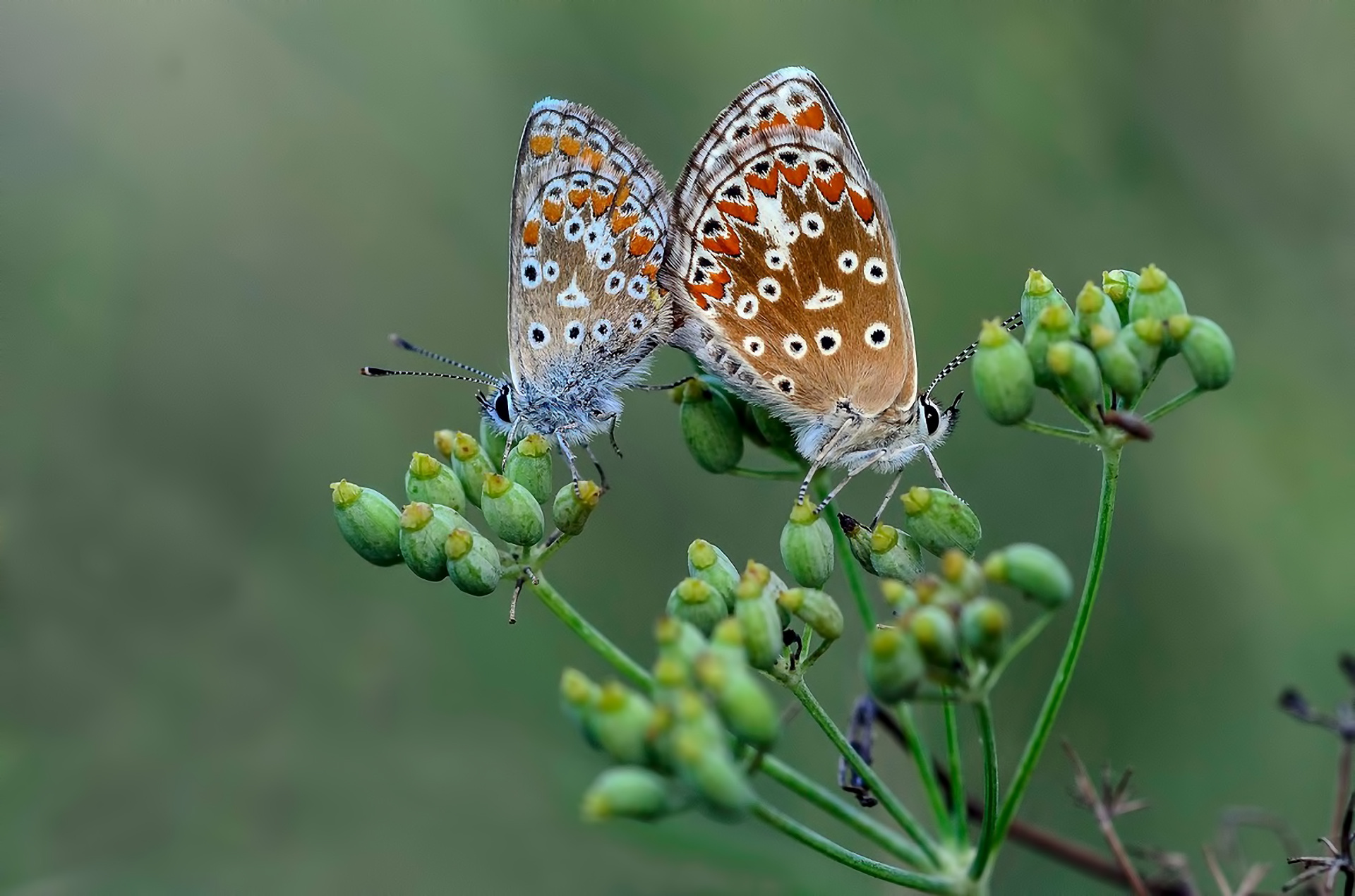 Animals Nature Butterflies Beauty Love Wallpaper