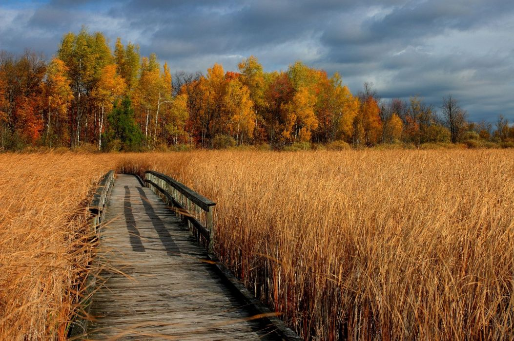 autumn dry grass bridge trees landscape wallpaper