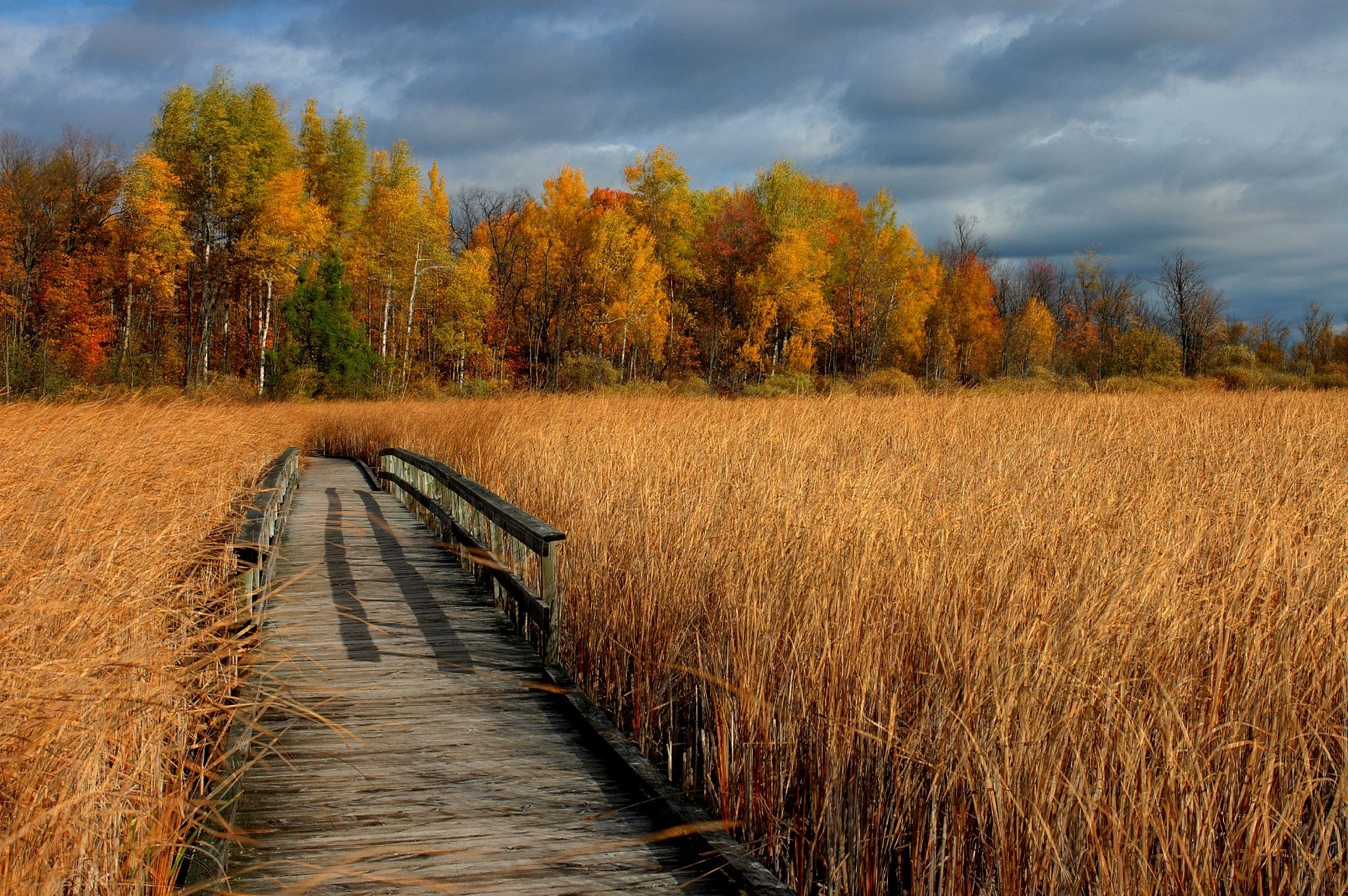 dry grass field background. Autumn Dry Grass Bridge Trees Landscape Wallpaper 2048x1361 Field Background A