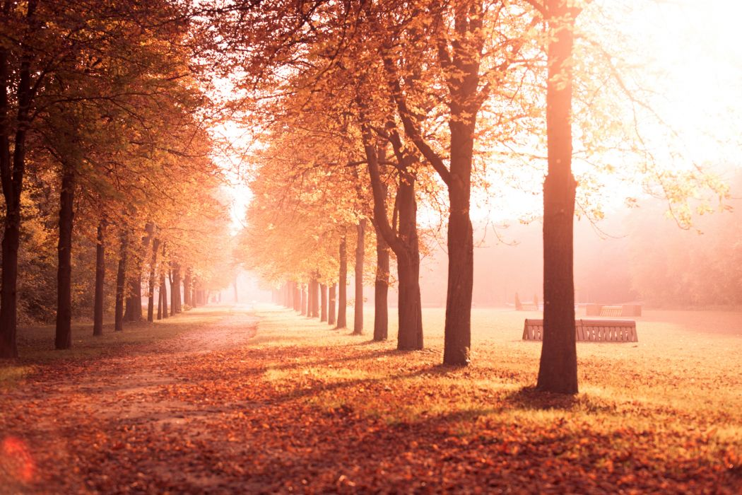 autumn park trees alley road leaves yellow nature wallpaper