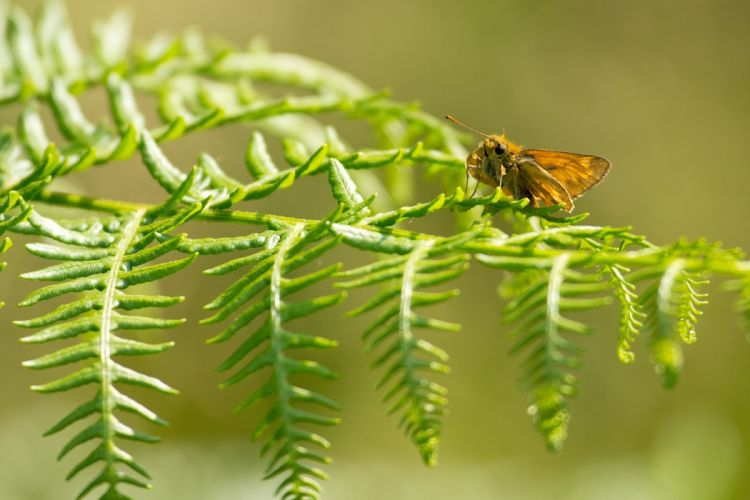 butterfly leaf macro wallpaper