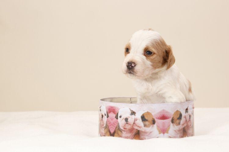 dog puppy box wallpaper