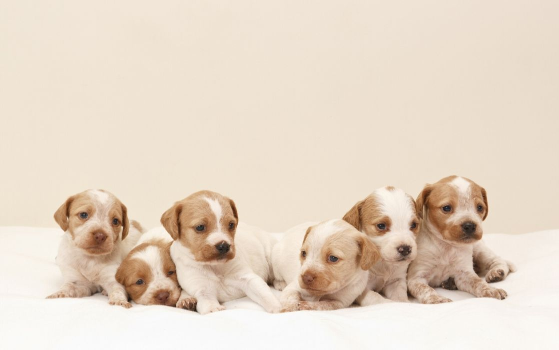 dogs puppies wallpaper