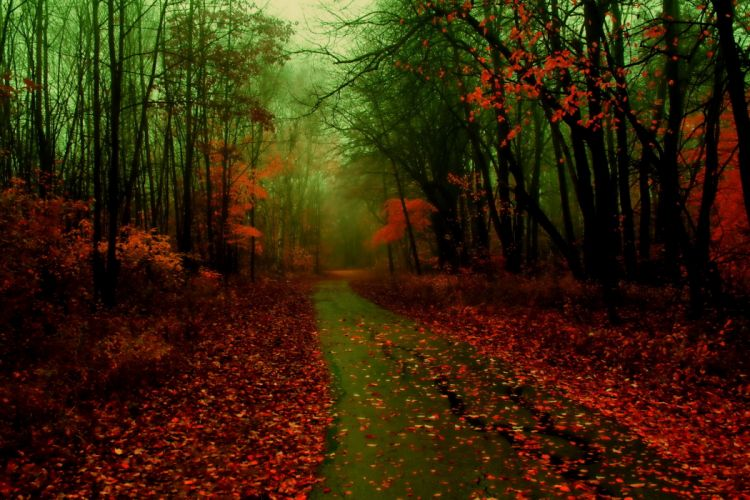 forest fog foliage autumn road wallpaper