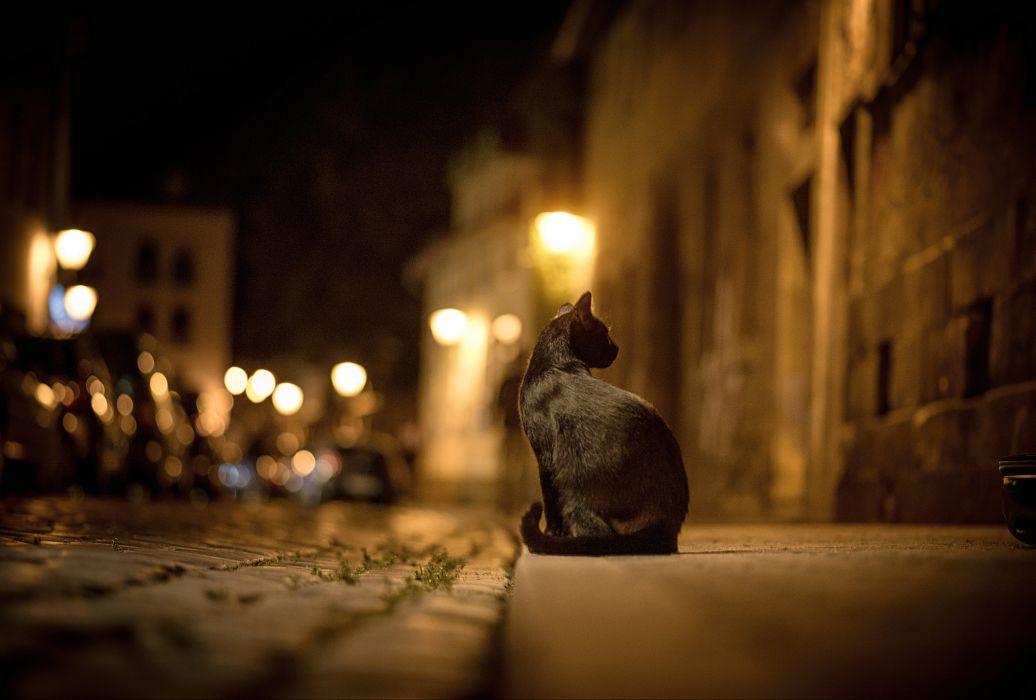 cat city night street bokeh lights road pavement sidewalk wallpaper