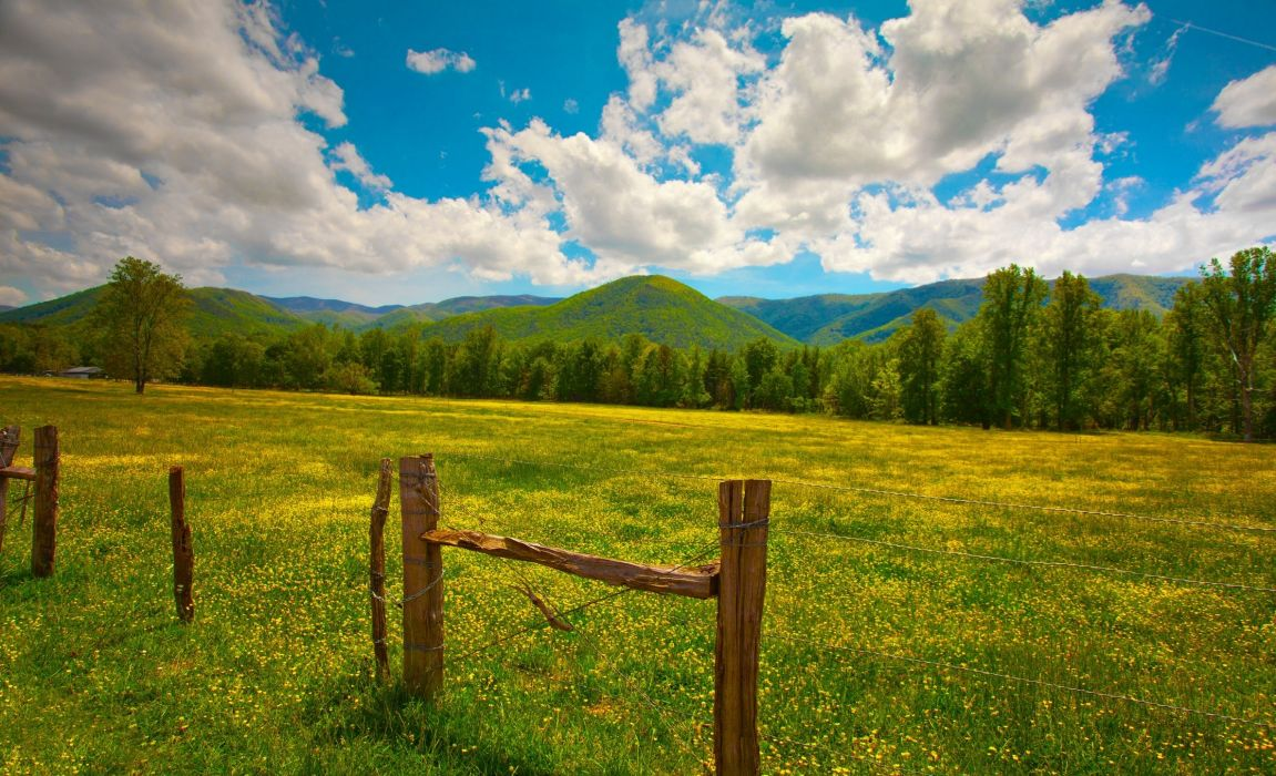 grass herbs poles fence summer wallpaper