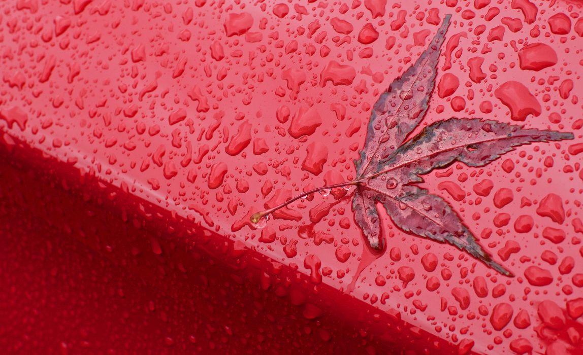 leaf drops fall macro wallpaper