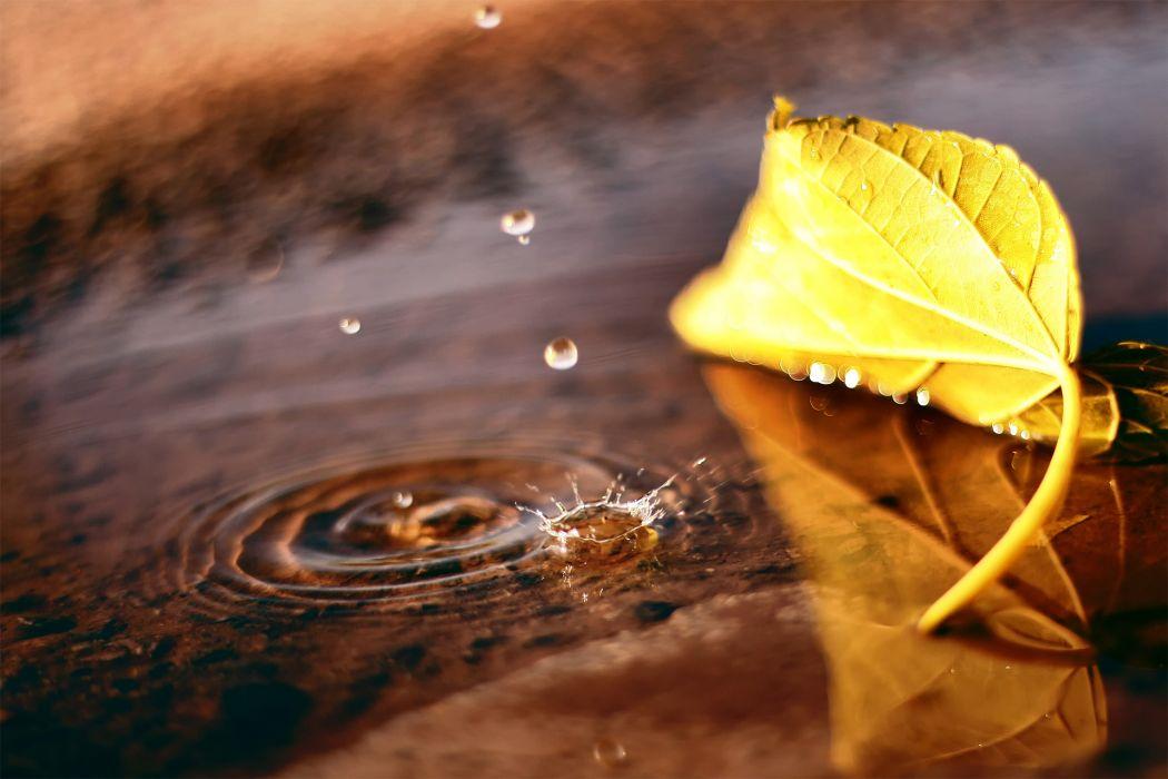 macro leaf puddle drop fall autumn wallpaper
