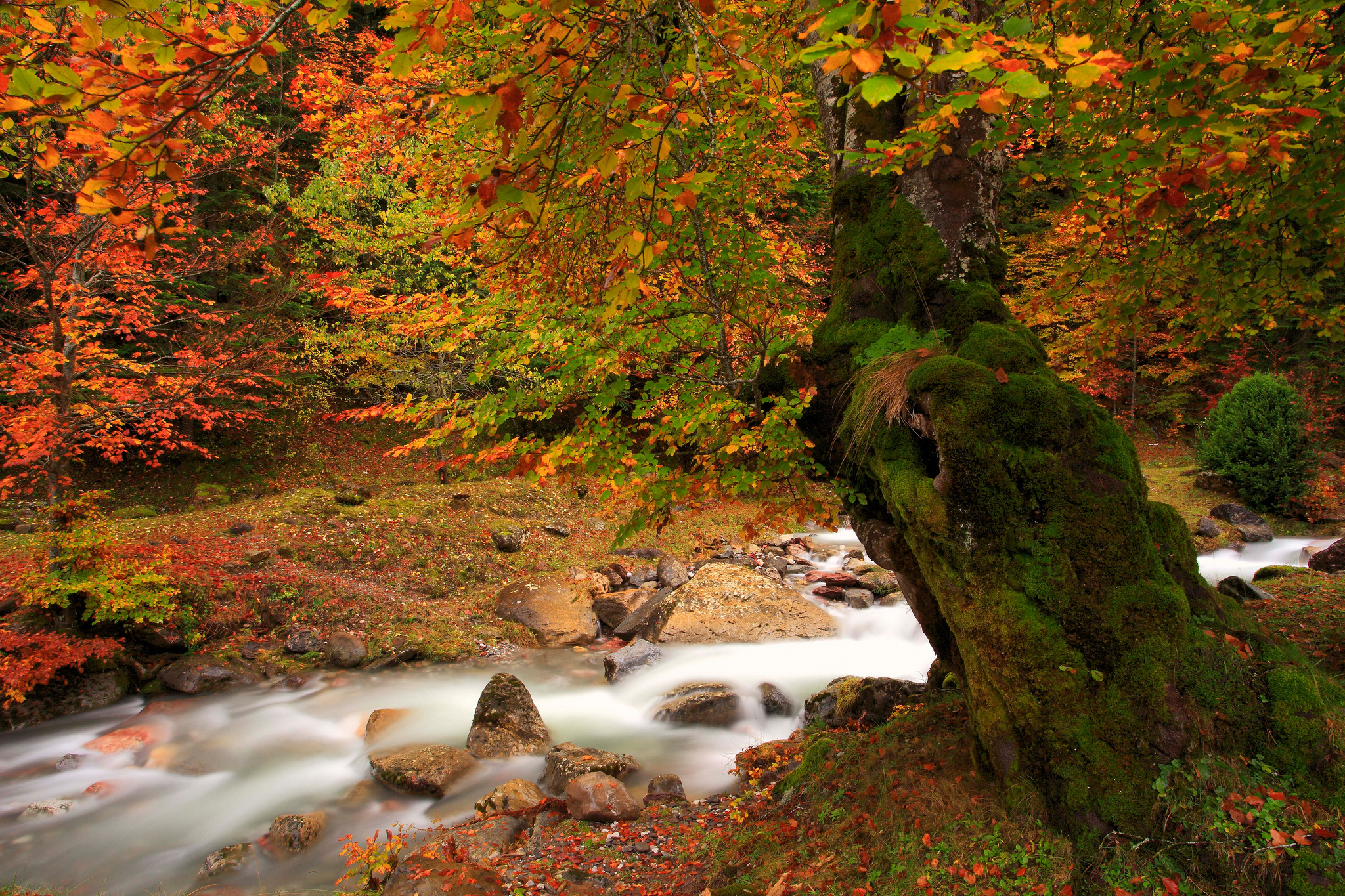 AUTUMN RIVER GLOW Rivers Nature Background Wallpapers on
