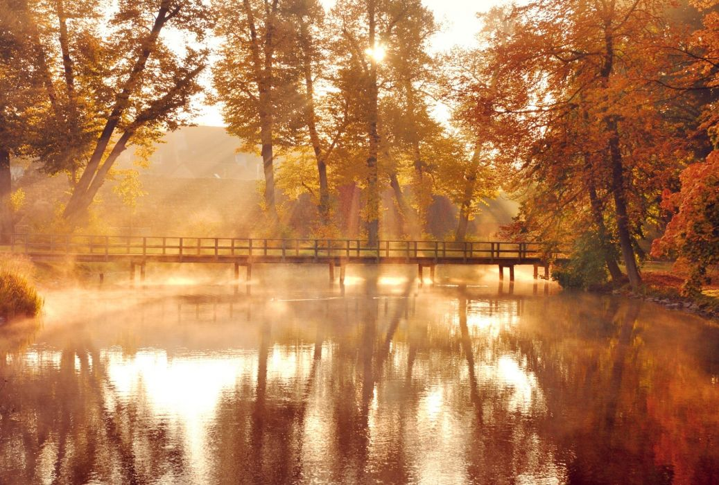 nature trees leaves autumn reflection      g wallpaper