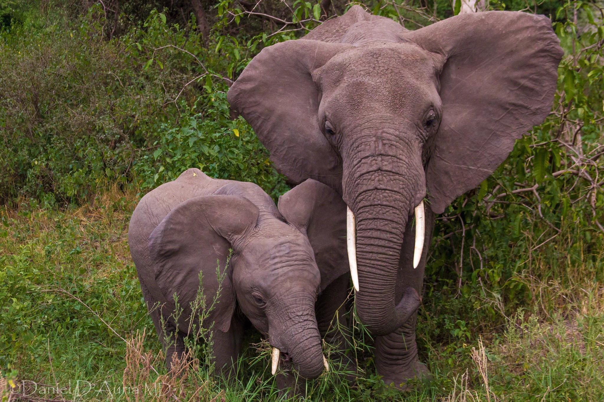 baby elephant wallpaper 2048x1366 166810 wallpaperup