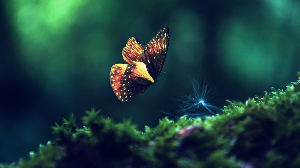 butterfly insects green close-up wallpaper