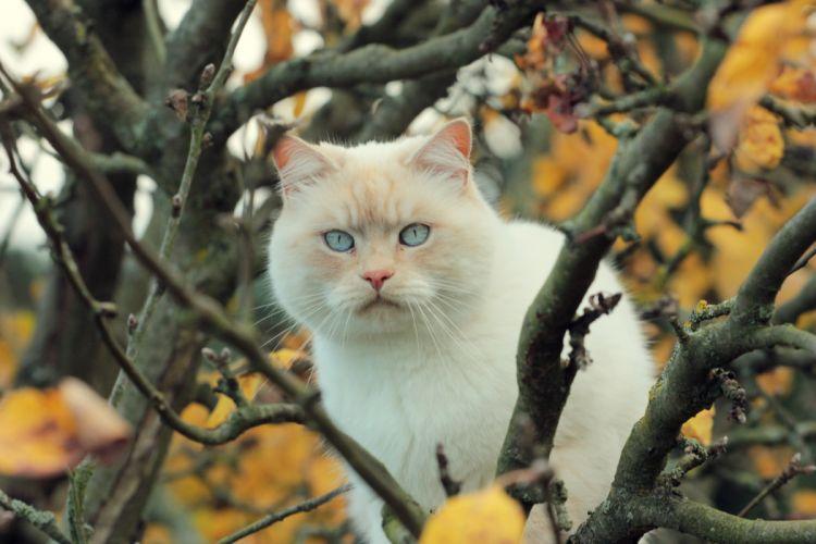 cat tree branches autumn wallpaper