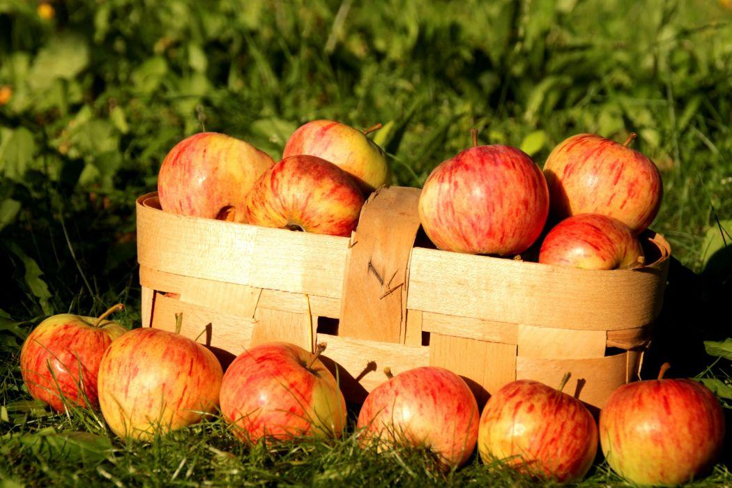 fruit basket apples nature wallpaper