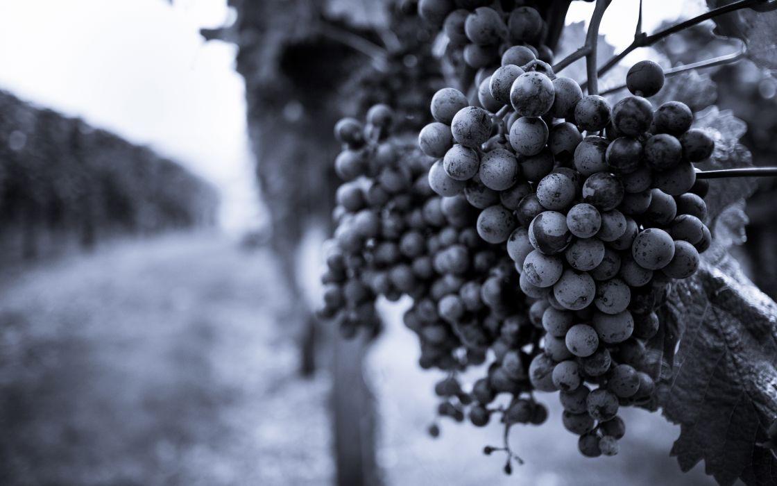 Grapes Fruit monochrome b-w wallpaper
