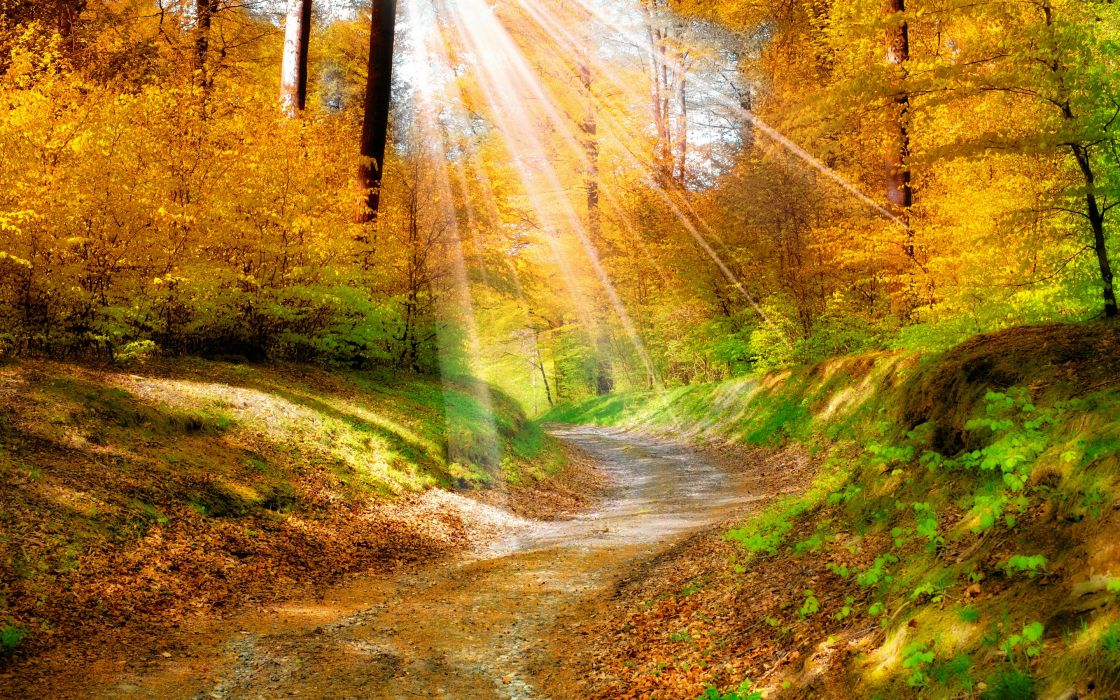 landscape nature golden autumn leaves yellow_ forest trees walkway sunlight wallpaper