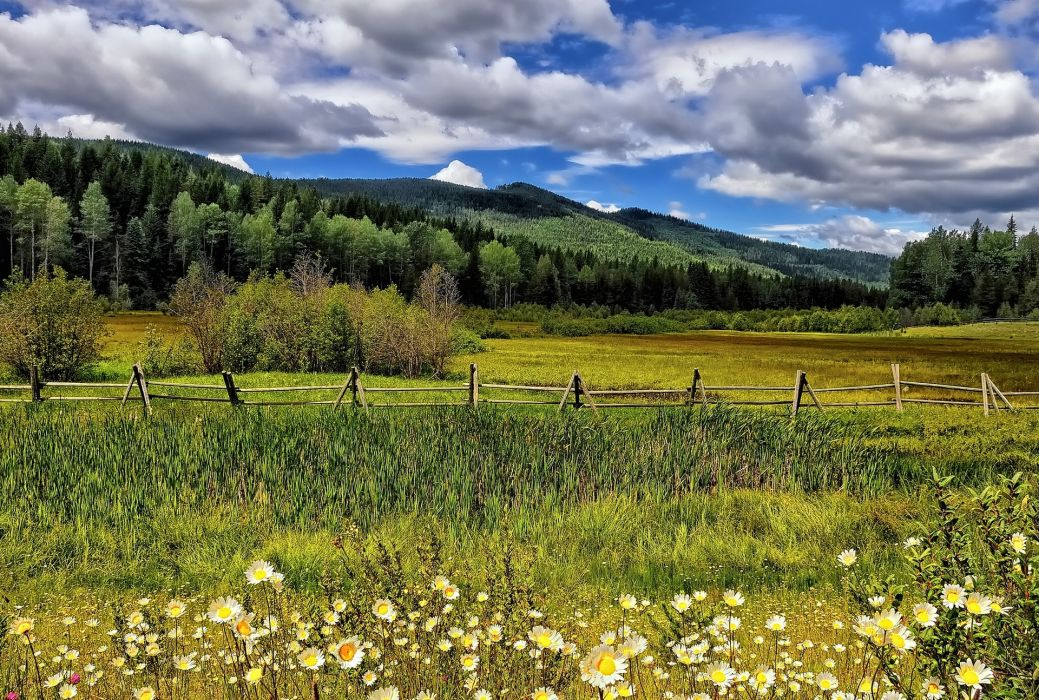 meadow flowers daisies fence trees mountains clouds wallpaper