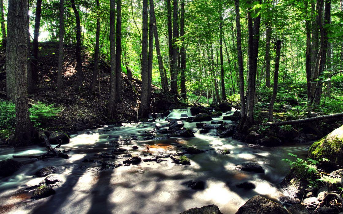 River Stream Trees Forest Rocks Stones wallpaper