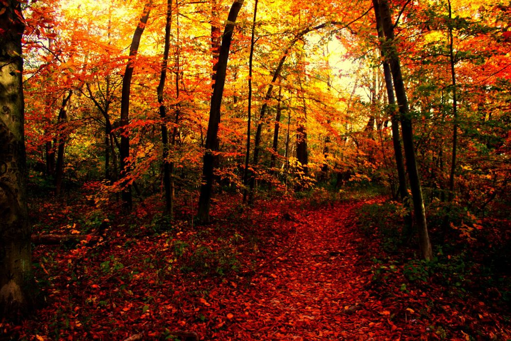 Seasons Autumn Forests Trail Nature wallpaper