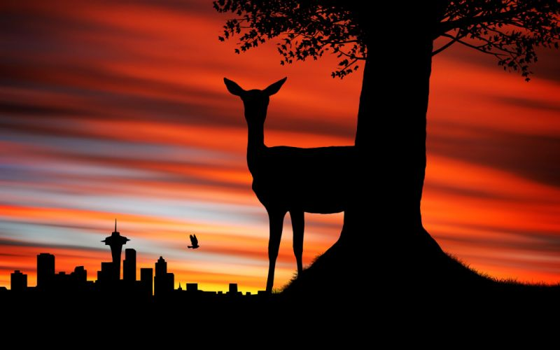 seattle sunset deer wallpaper