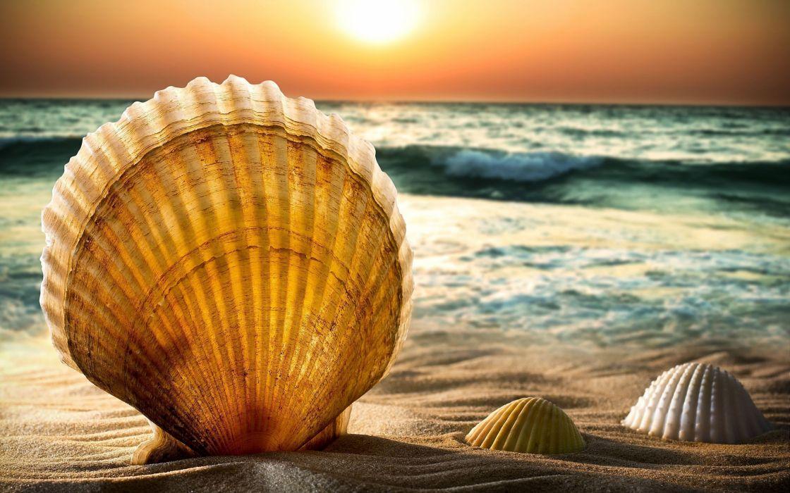shells and sand_ beach sea water wave horizon sun sunset sky bokeh wallpaper