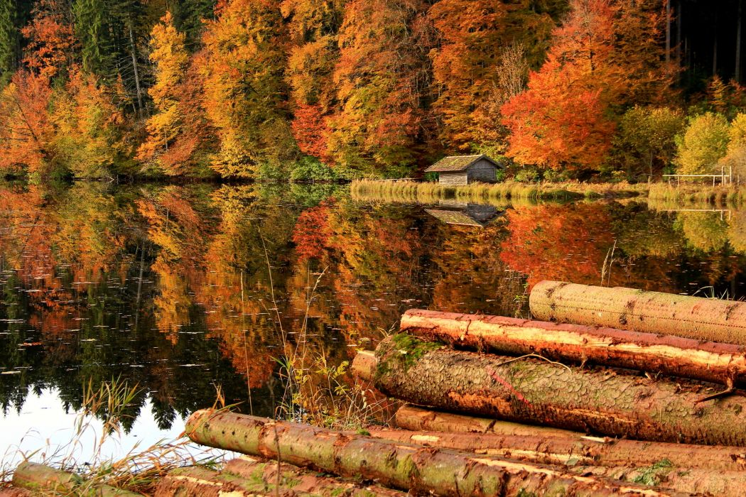 Trees Forest House Logs Lake Reflection autumn wallpaper