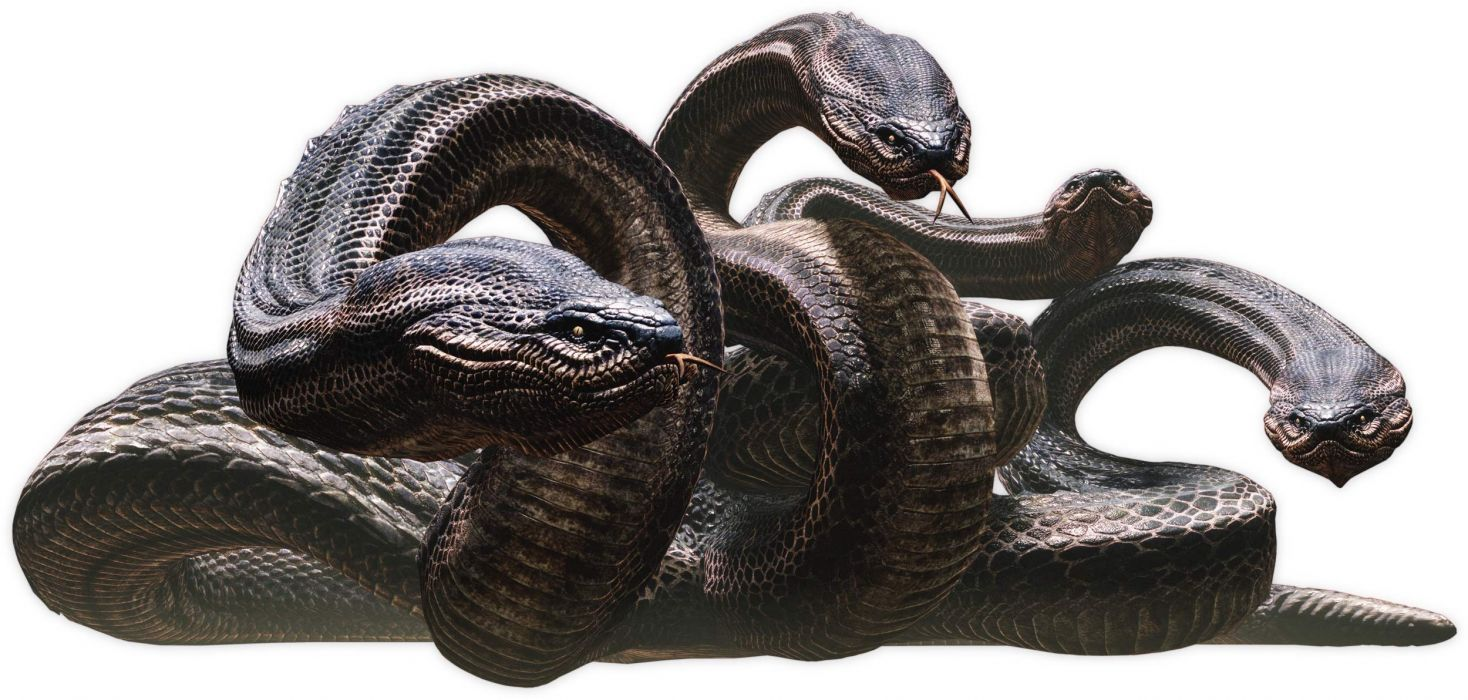 DRAGONS DOGMA fantasy game snake     f wallpaper