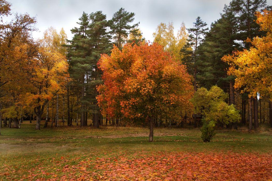 autumn park forest trees     r wallpaper