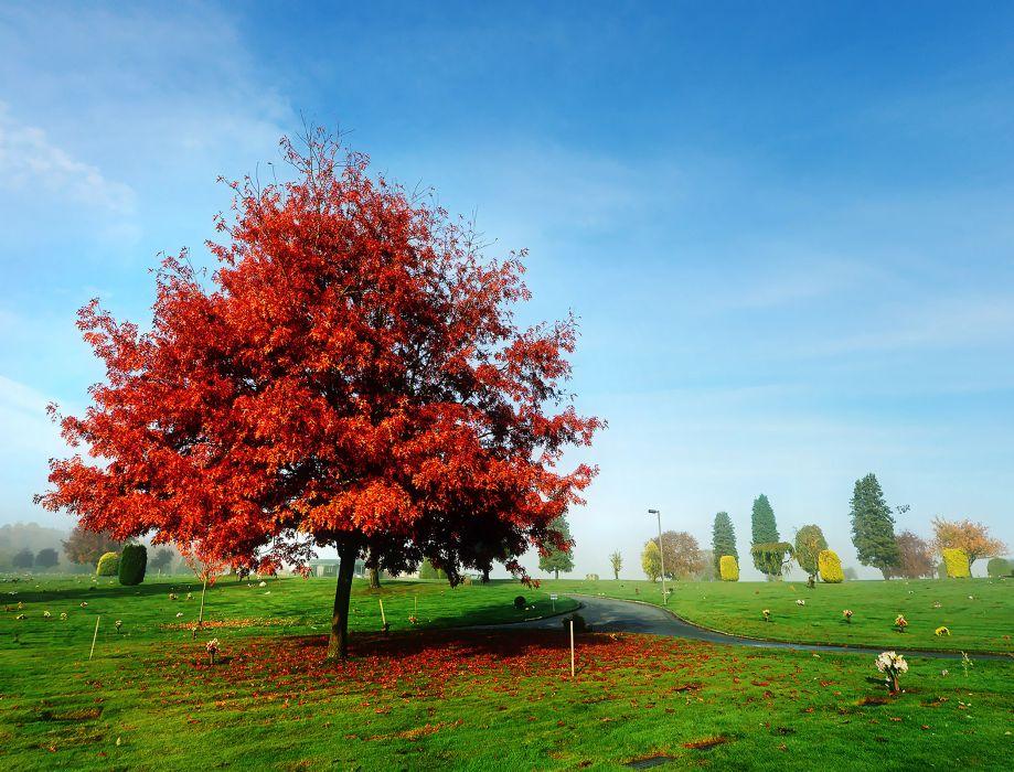 autumn park road tree landscape    y wallpaper