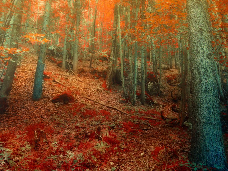 forest autumn trees nature     h wallpaper