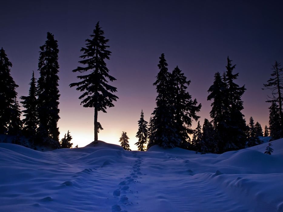 winter sunset trees snow tracks landscape wallpaper