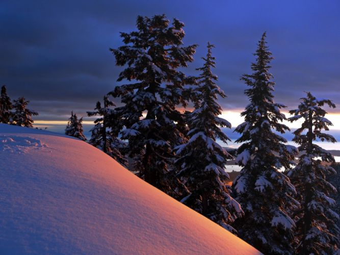 winter trees hill landscape wallpaper