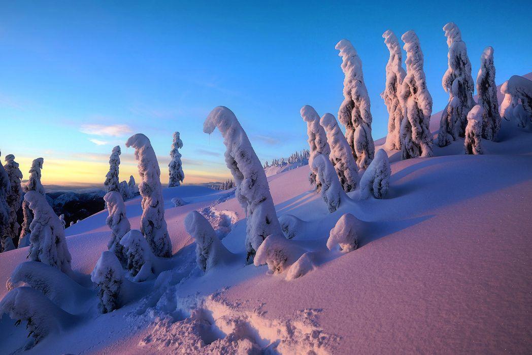 winter trees snow drifts landscape    h wallpaper