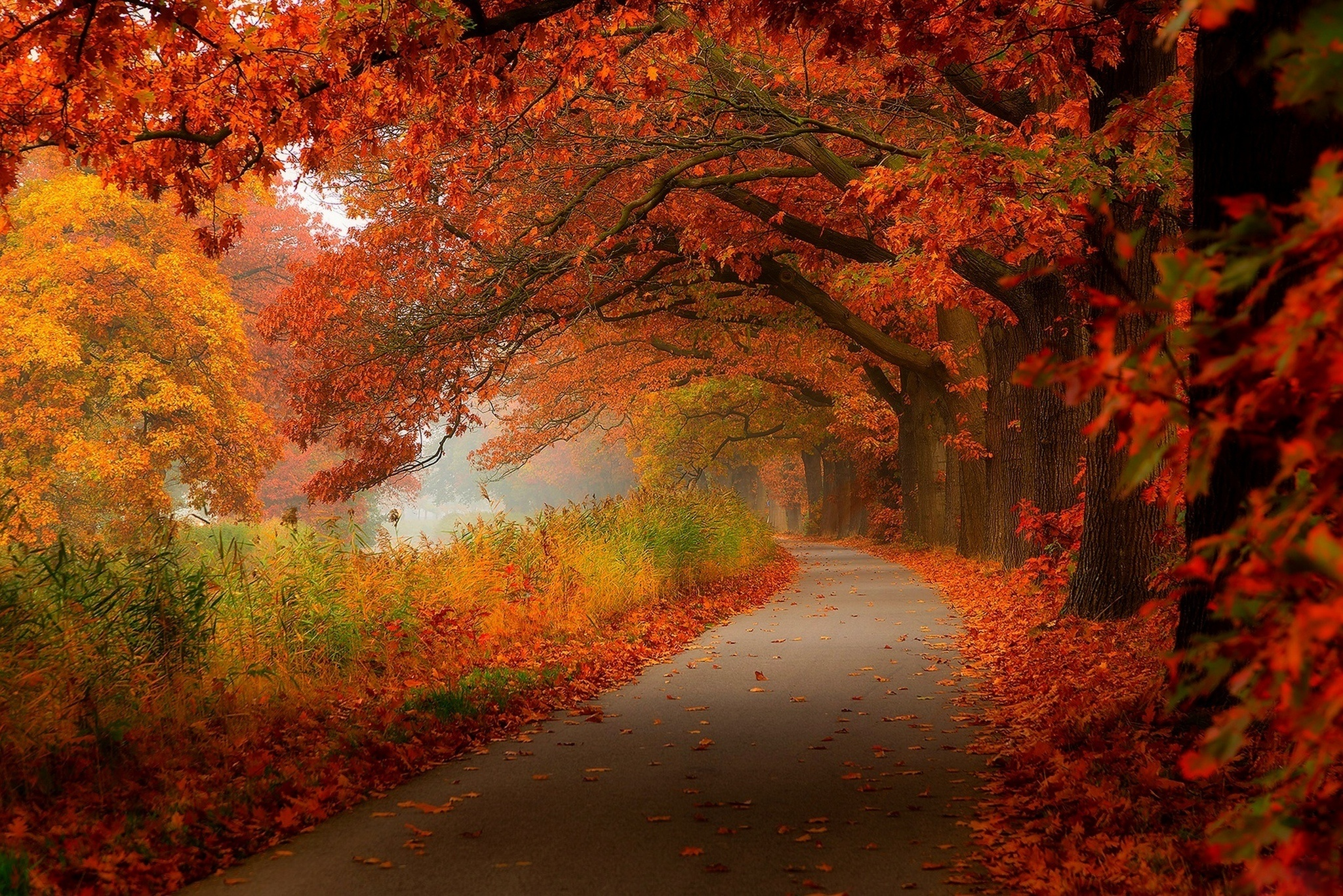 Autumn leaves walk nature forest leaves hdr trees park wallpaper