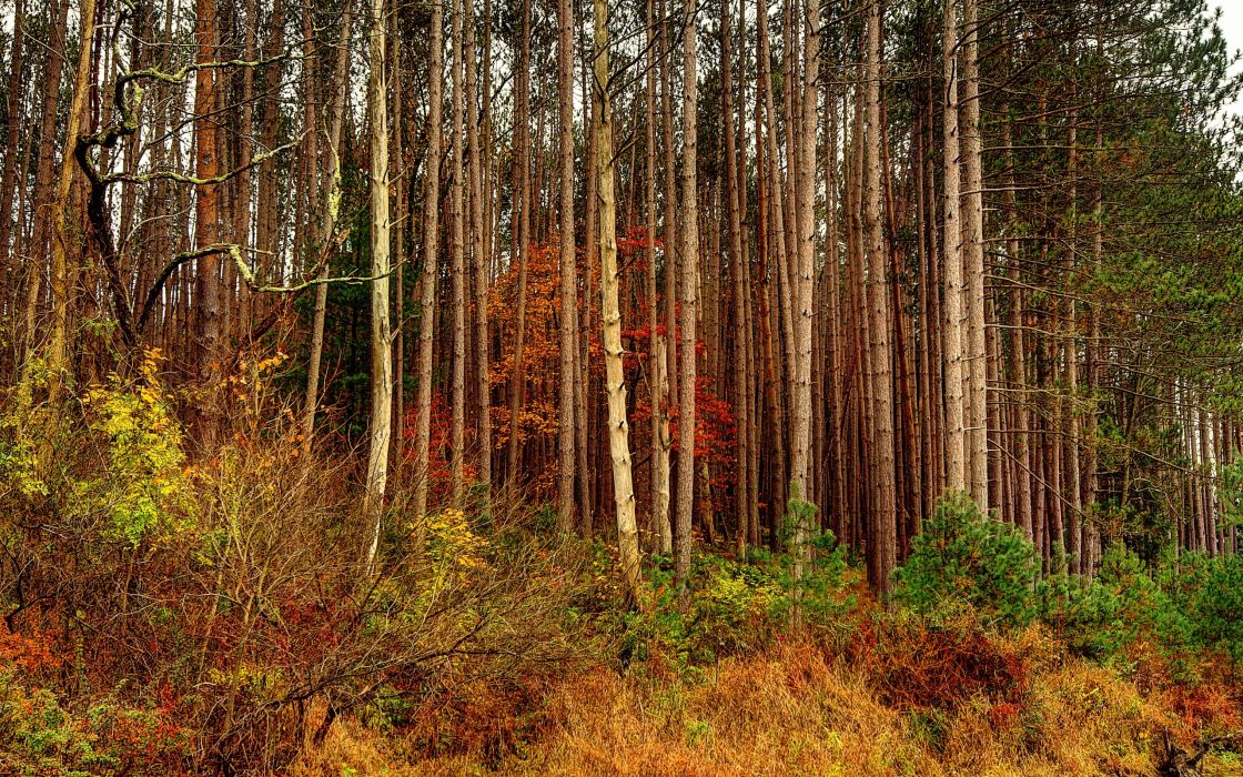 autumn forest trees nature wallpaper
