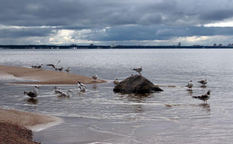 Baltic sea shore seagulls landscape wallpaper