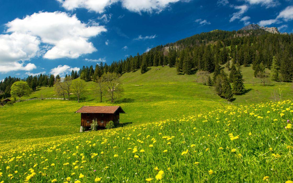 bavarian alps green field trees grass wallpaper