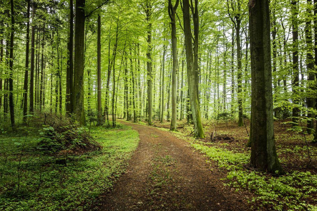 forest trees road landscape wallpaper