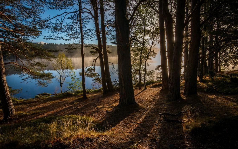 Kinrara Scotland England river forest trees wallpaper