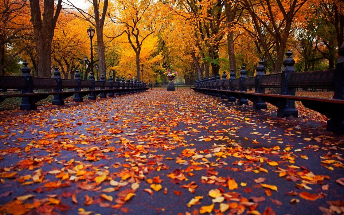 Autumn Nature Park Bench Trees Leaves Avenue New York Wallpaper
