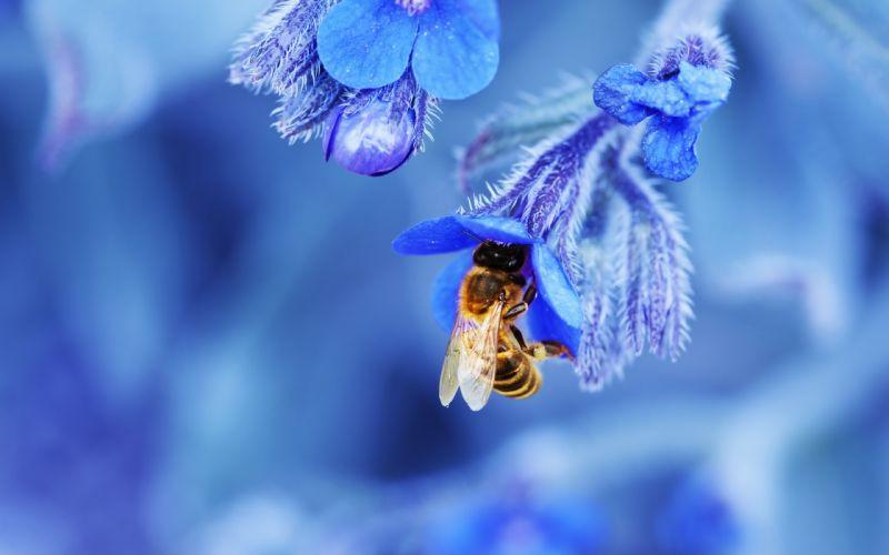 bee flower close-up wallpaper