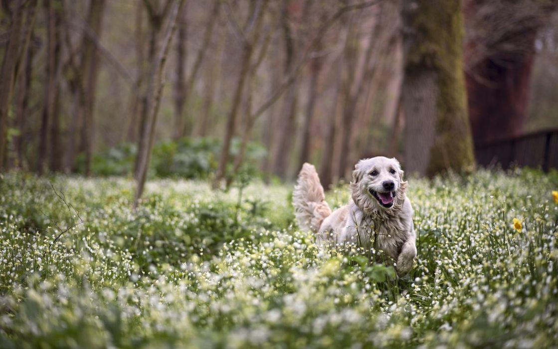 dog forest flowers spring wallpaper